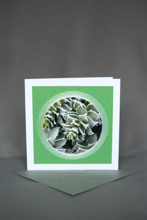 Winterkarte mit Hauswurz