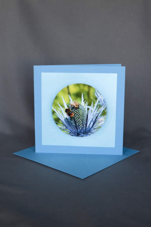 Blaudistel mit Bienen