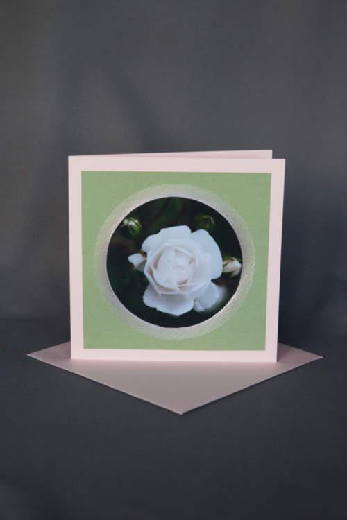Rosa Grusskarte mit weisser Rose