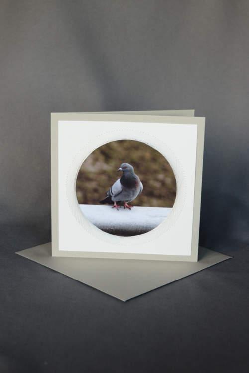 Taube auf grauer Trauerkarte