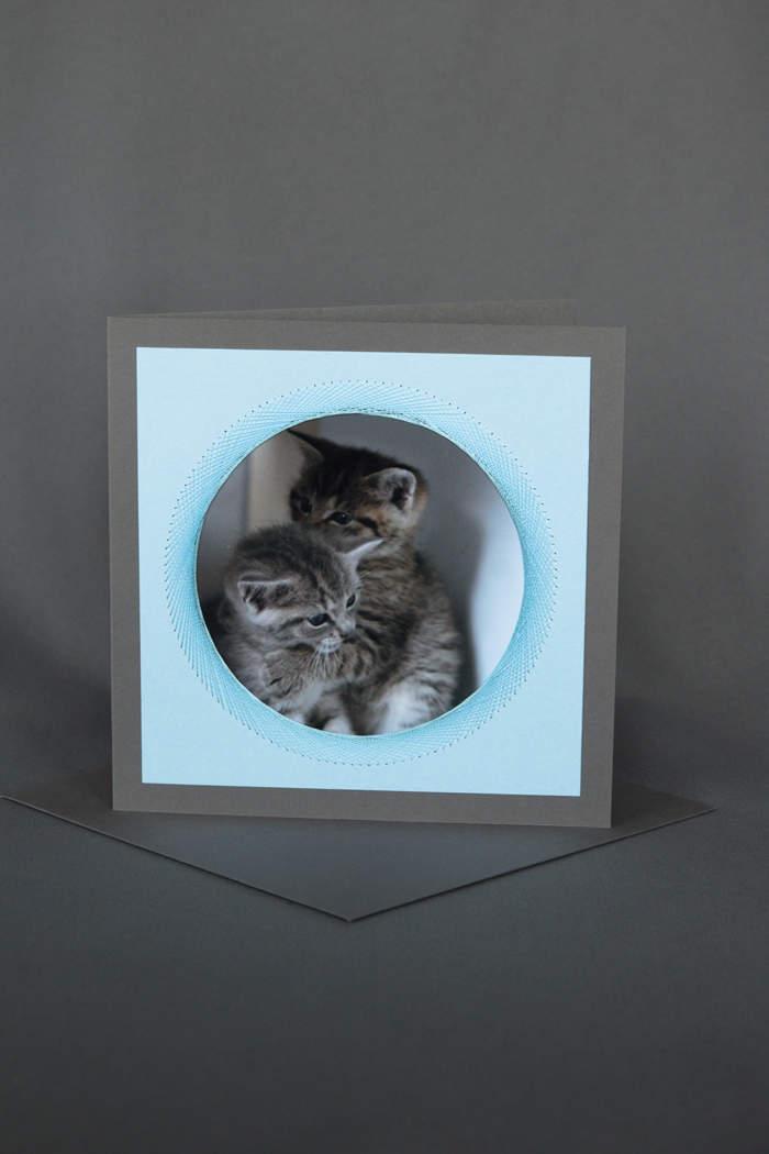 Junge spielende Katzen auf hellblauer Geburtstagskarte