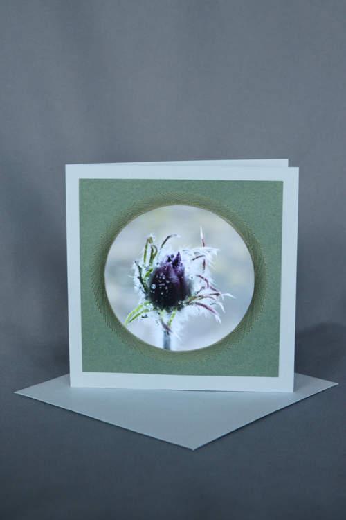 Geschlossene lila Blüte auf gründer Geburtstagskarte