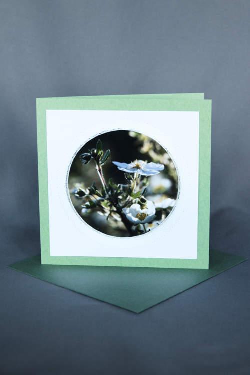 Weisse Blüten auf grüner Glückwunschkarte